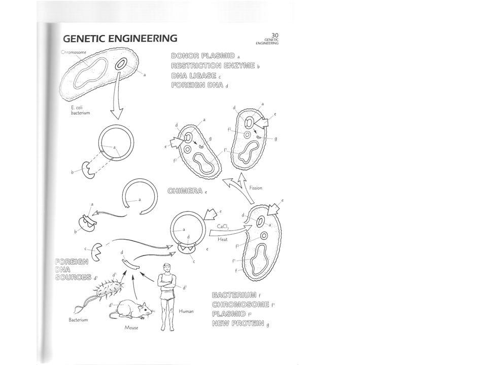 Bacterial Genetics Lectures 3 St Replication Dna Regulation Change