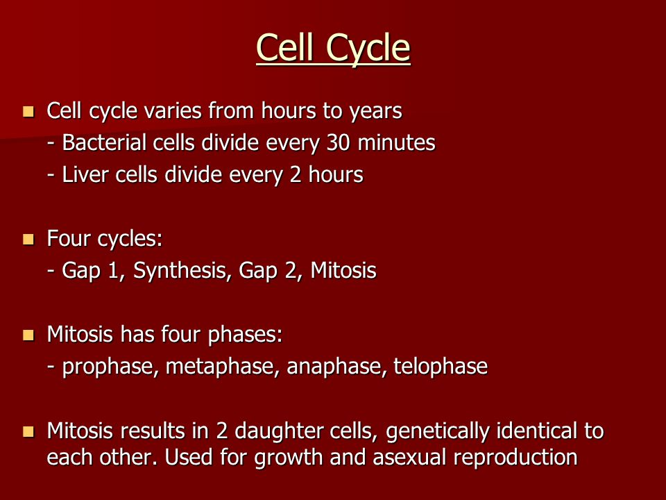 Cell Cycle Cell cycle varies from hours to years Cell cycle varies from hours to years - Bacterial cells divide every 30 minutes - Liver cells divide every 2 hours Four cycles: Four cycles: - Gap 1, Synthesis, Gap 2, Mitosis Mitosis has four phases: Mitosis has four phases: - prophase, metaphase, anaphase, telophase Mitosis results in 2 daughter cells, genetically identical to each other.