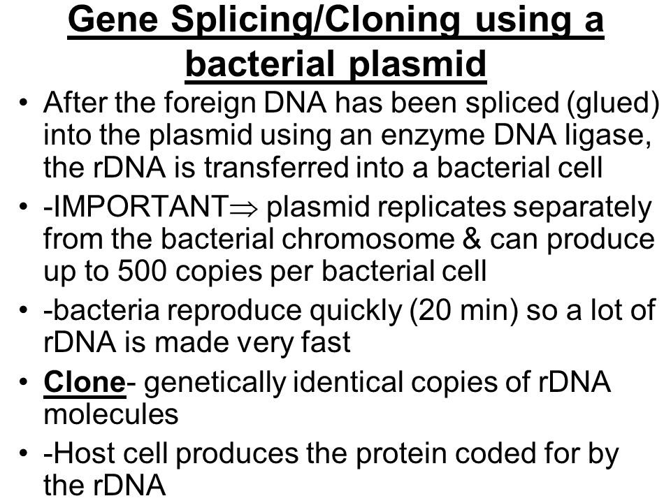 Gene Splicing/Cloning using a bacterial plasmid After the foreign DNA has been spliced (glued) into the plasmid using an enzyme DNA ligase, the rDNA is transferred into a bacterial cell -IMPORTANT  plasmid replicates separately from the bacterial chromosome & can produce up to 500 copies per bacterial cell -bacteria reproduce quickly (20 min) so a lot of rDNA is made very fast Clone- genetically identical copies of rDNA molecules -Host cell produces the protein coded for by the rDNA