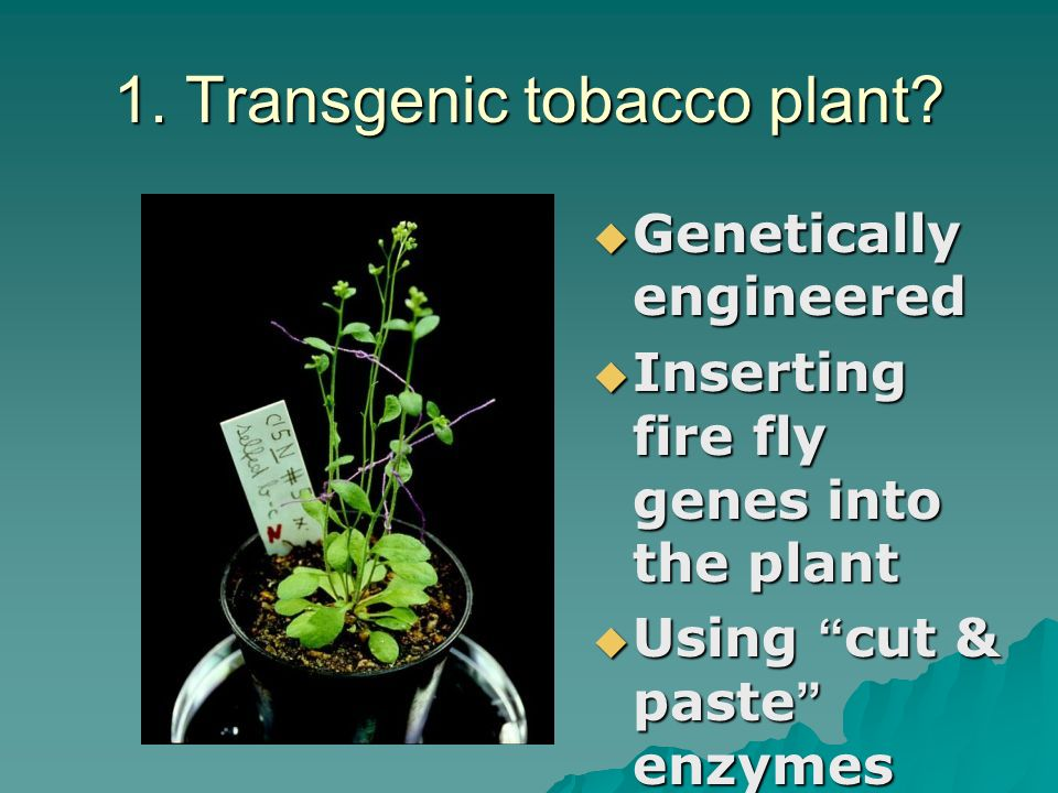 Genetic Technology  Recombinant DNA &  Bacterial Transformation