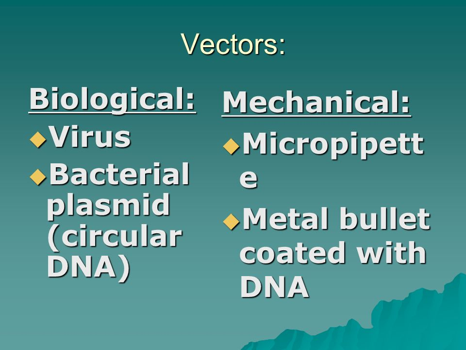Vectors = vehicles  Carry foreign DNA fragments into the host  Bacteria carried the firefly DNA into the tobacco cells  Biological or  Mechanical