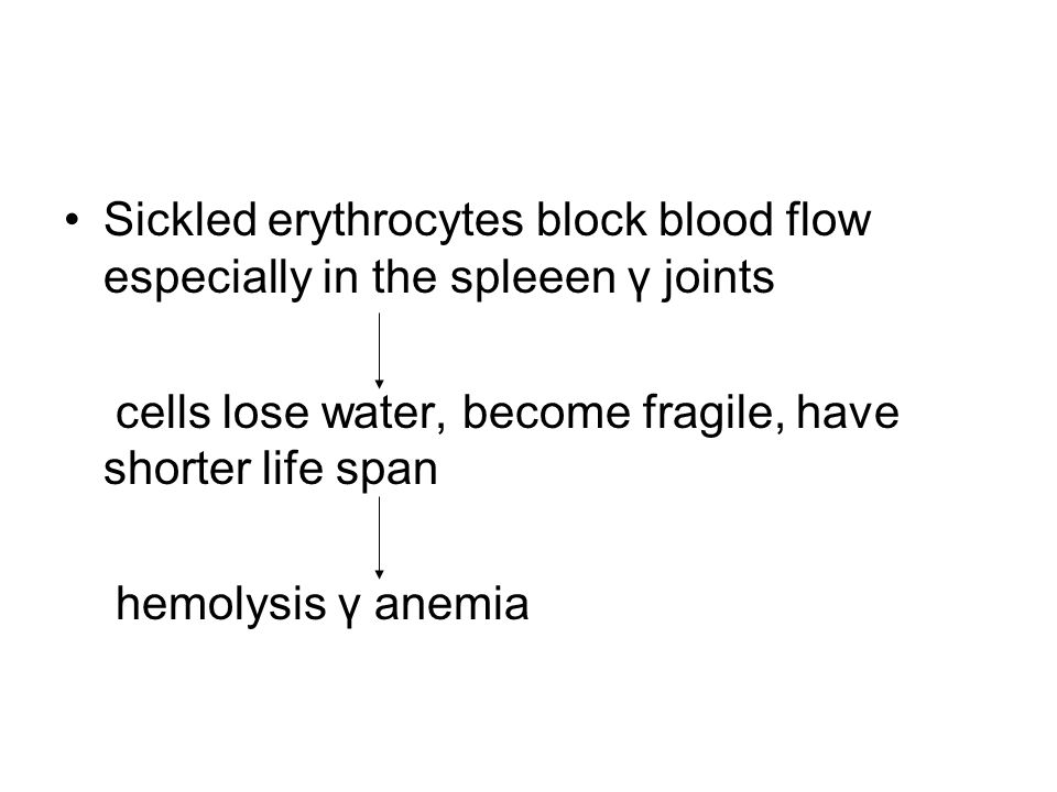 Sickled erythrocytes block blood flow especially in the spleeen γ joints cells lose water, become fragile, have shorter life span hemolysis γ anemia
