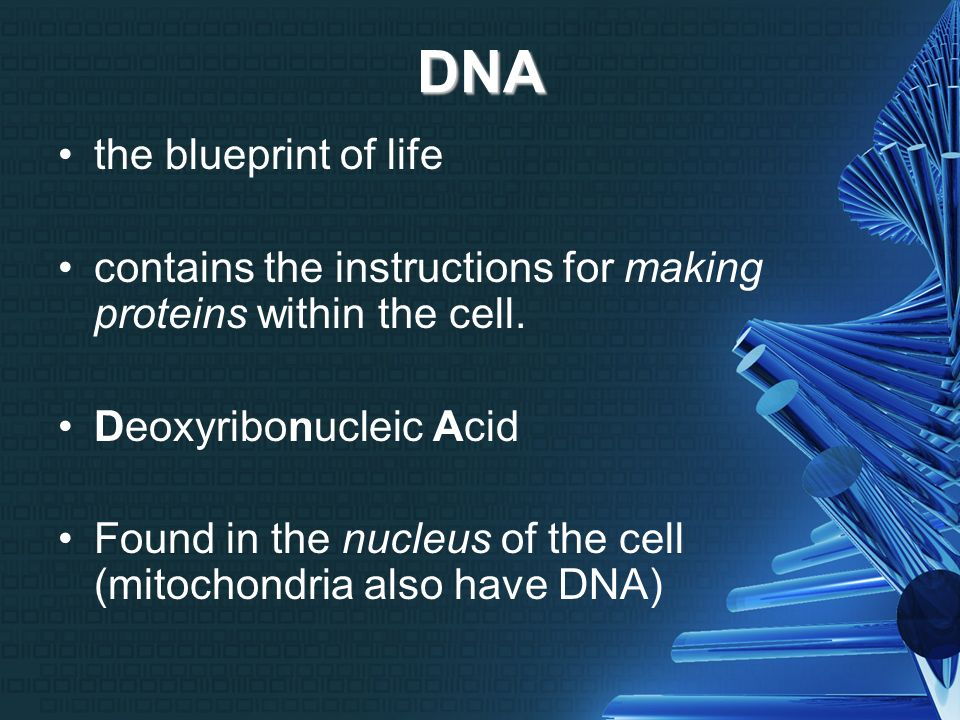 Dna and protein synthesis cracking the code dna the blueprint of 2 dna the blueprint malvernweather Images