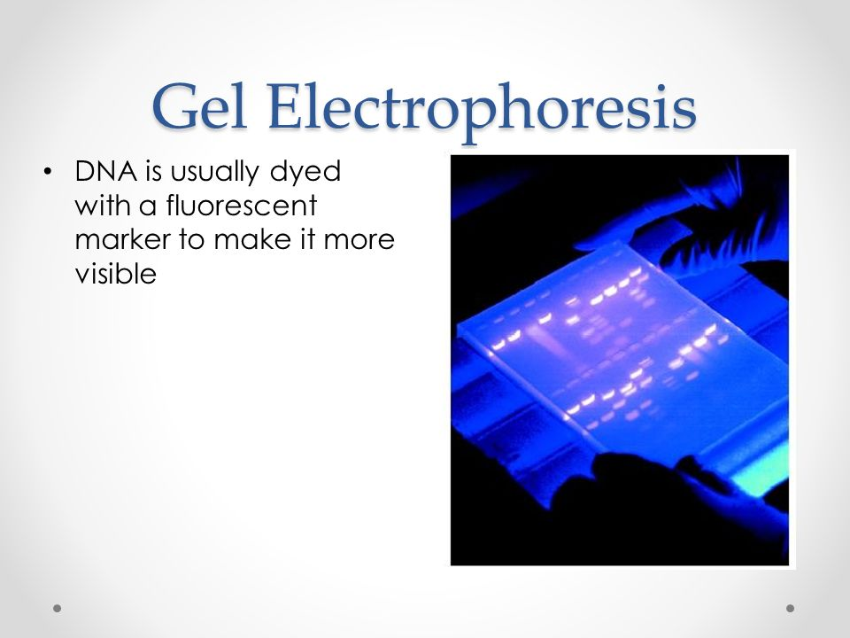 Gel Electrophoresis DNA is usually dyed with a fluorescent marker to make it more visible