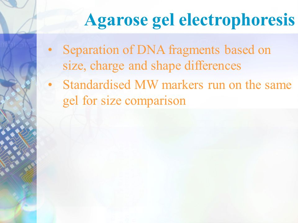 Separation of DNA fragments based on size, charge and shape differences Standardised MW markers run on the same gel for size comparison Agarose gel electrophoresis