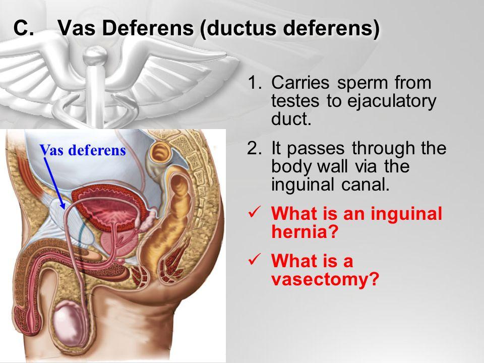 Reproductive Systems A B C D E F G H I Ile Or Female