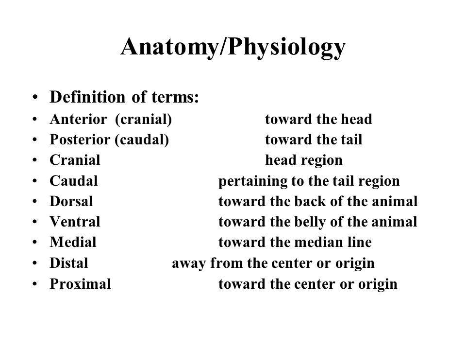 Anatomy/Physiology Definition of terms: Anterior (cranial)toward the ...