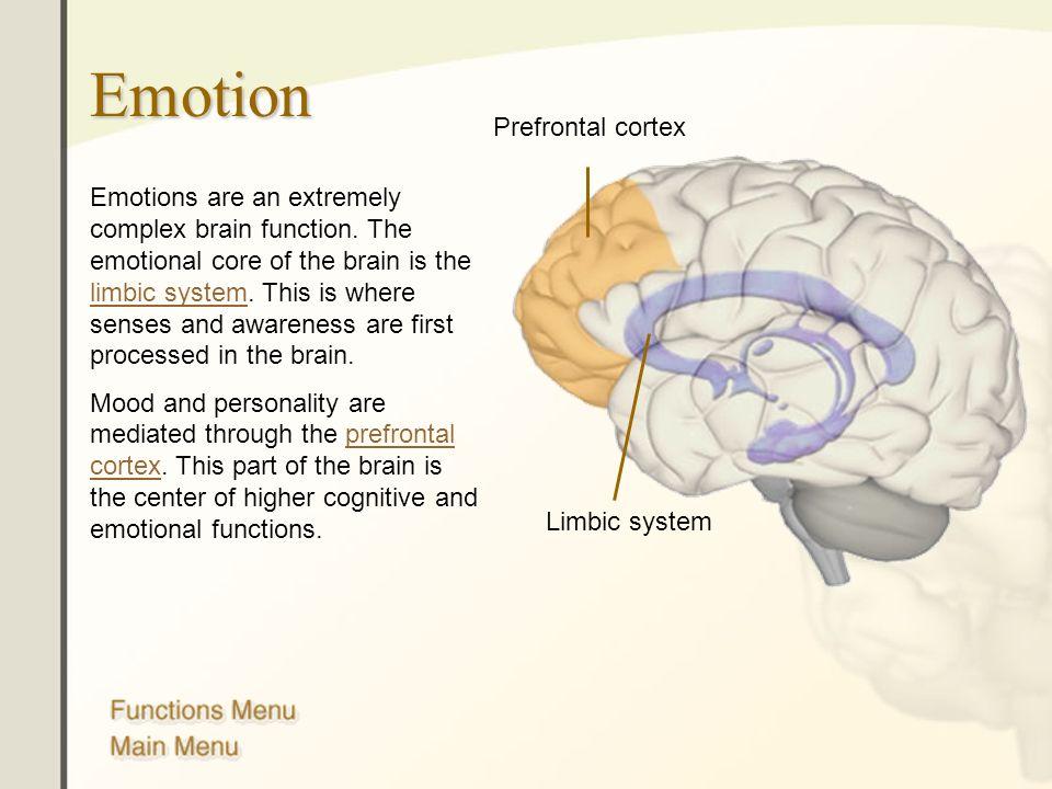 The Human Brain Anatomy Functions And Injury Main Menu Brain