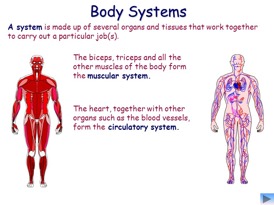 Anatomy And Physiology This Is The Structure And Function Of The