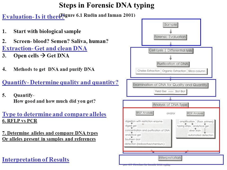 JS 111: Methods used to Study DNA: Review of RFLP Multiplex