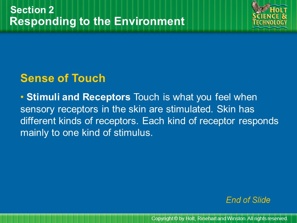 Responding to the Environment Section 2 Sense of Touch Stimuli and Receptors Touch is what you feel when sensory receptors in the skin are stimulated.