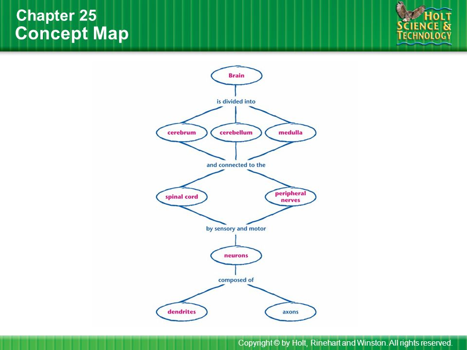 Concept Map Chapter 25 Copyright © by Holt, Rinehart and Winston. All rights reserved.