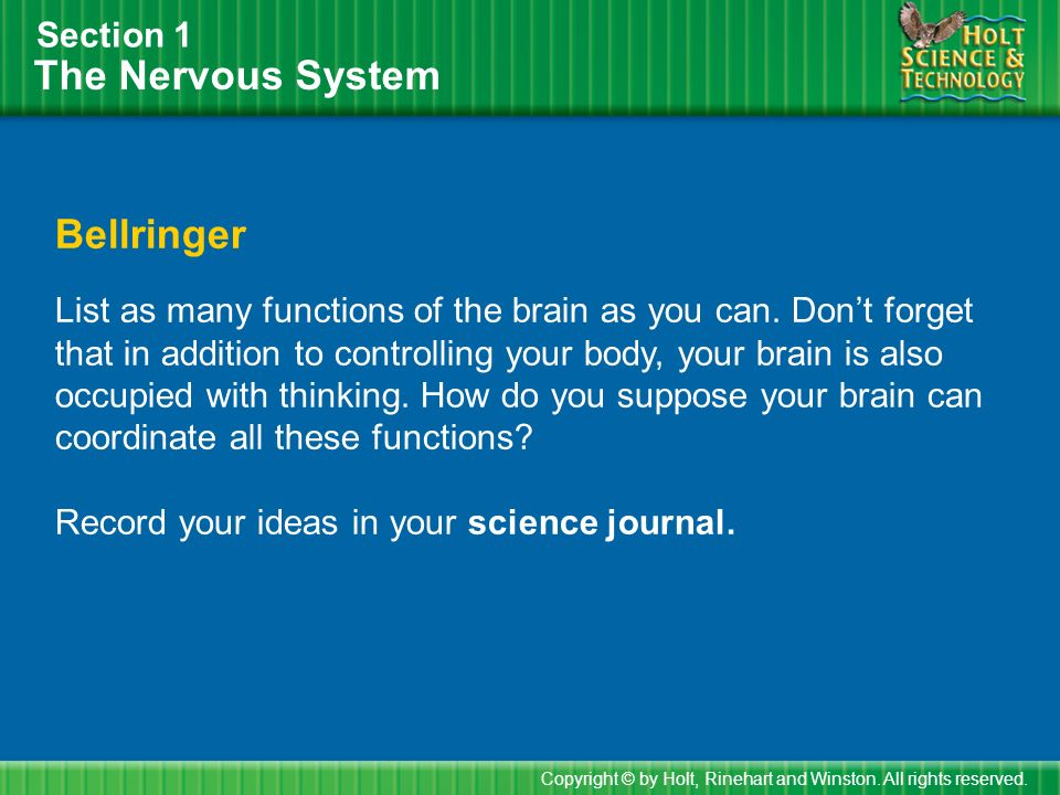 The Nervous System Section 1 Bellringer List as many functions of the brain as you can.