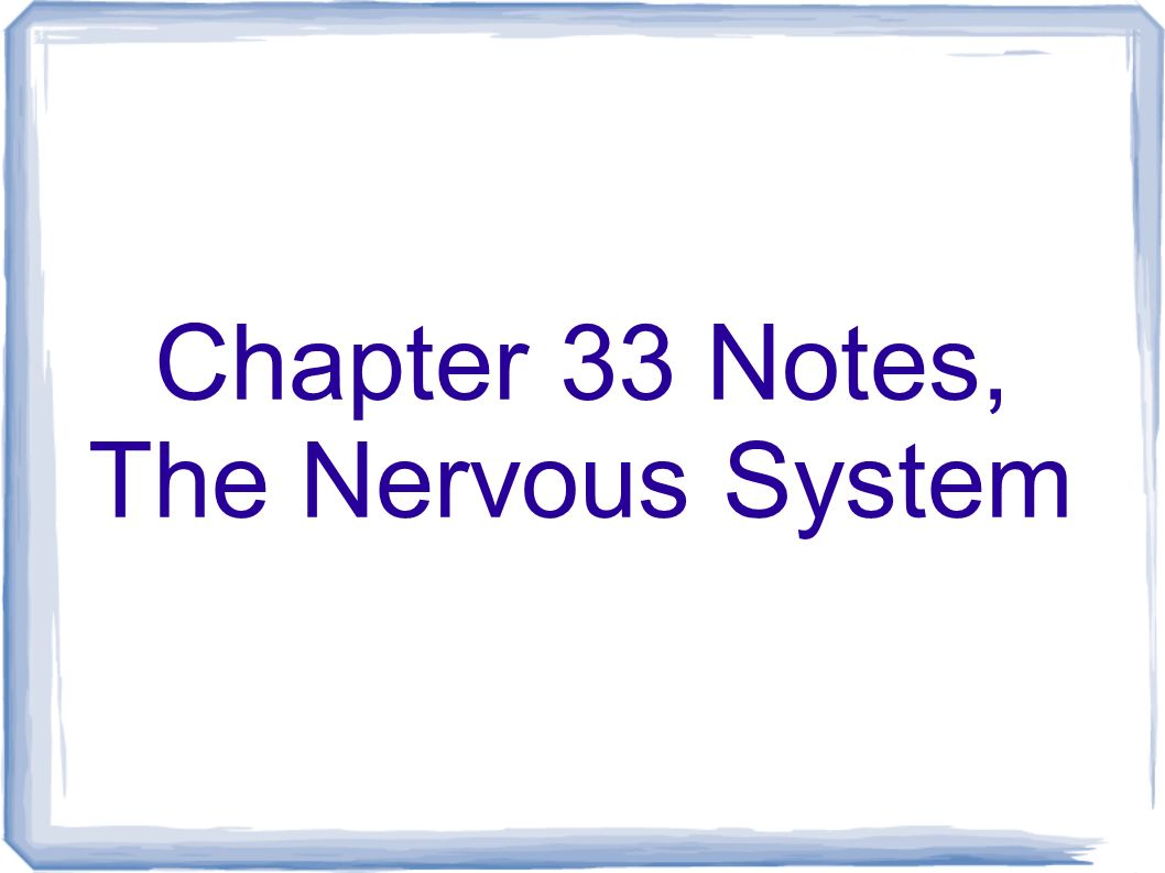 Chapter 33 Notes, The Nervous System