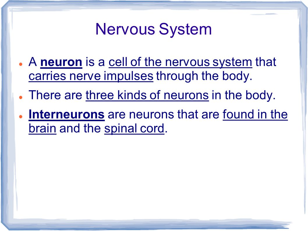 Nervous System A neuron is a cell of the nervous system that carries nerve impulses through the body.