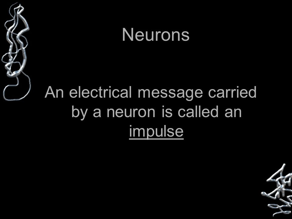 Neurons An electrical message carried by a neuron is called an impulse