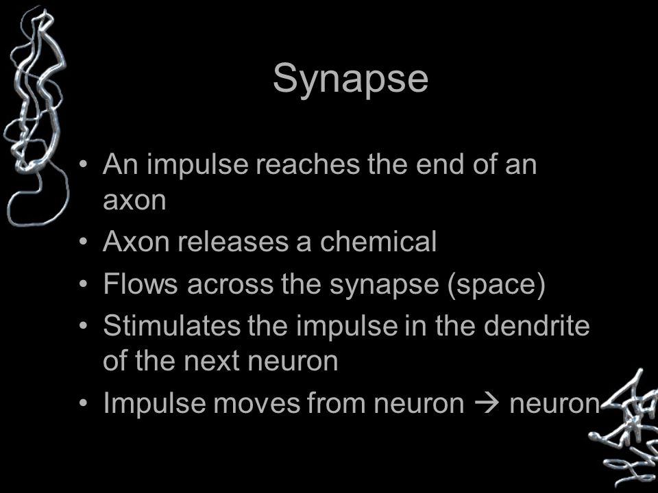 Synapse An impulse reaches the end of an axon Axon releases a chemical Flows across the synapse (space) Stimulates the impulse in the dendrite of the next neuron Impulse moves from neuron  neuron
