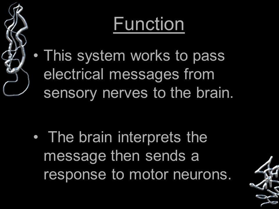 Function This system works to pass electrical messages from sensory nerves to the brain.