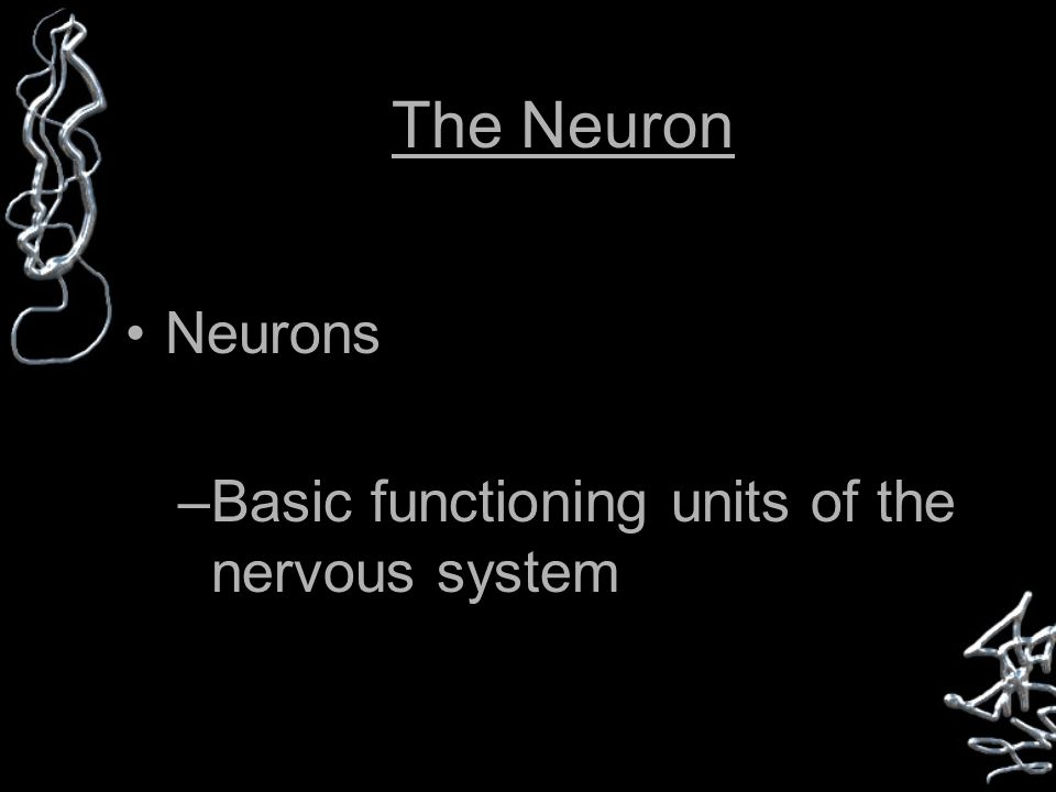 The Neuron Neurons –Basic functioning units of the nervous system