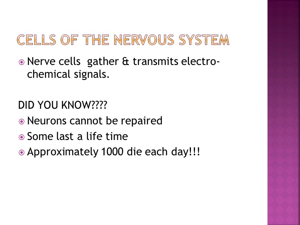  Nerve cells gather & transmits electro- chemical signals.