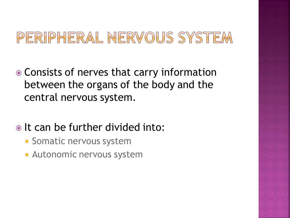  Consists of nerves that carry information between the organs of the body and the central nervous system.
