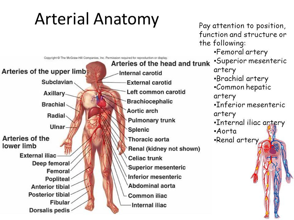 Blood Vessels and Hemodynamics. Types of blood vessels Arteries ...