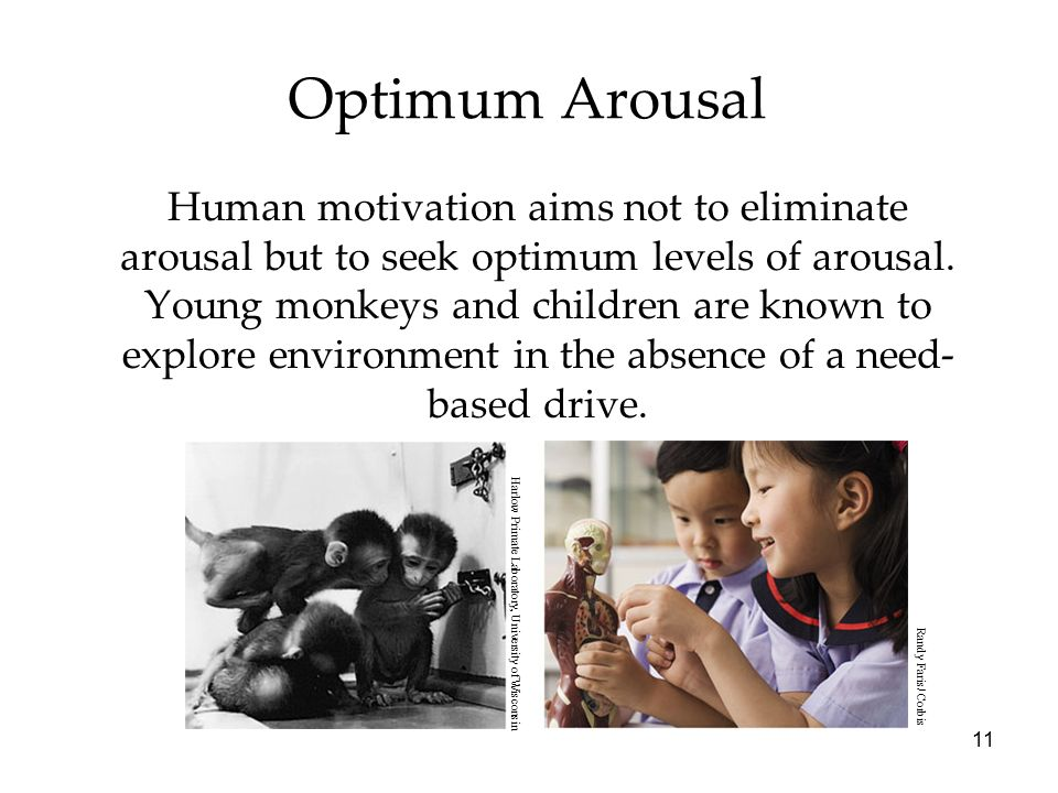 11 Optimum Arousal Human motivation aims not to eliminate arousal but to seek optimum levels of arousal.