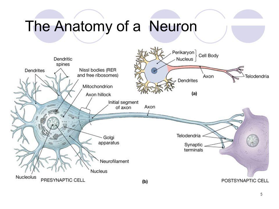 Histology of the Nervous Tissue 1. nervous system overview Nervous ...