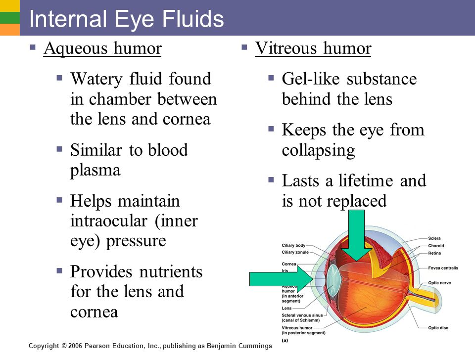 Copyright © 2006 Pearson Education, Inc., publishing as Benjamin Cummings Internal Eye Fluids  Aqueous humor  Watery fluid found in chamber between the lens and cornea  Similar to blood plasma  Helps maintain intraocular (inner eye) pressure  Provides nutrients for the lens and cornea  Vitreous humor  Gel-like substance behind the lens  Keeps the eye from collapsing  Lasts a lifetime and is not replaced
