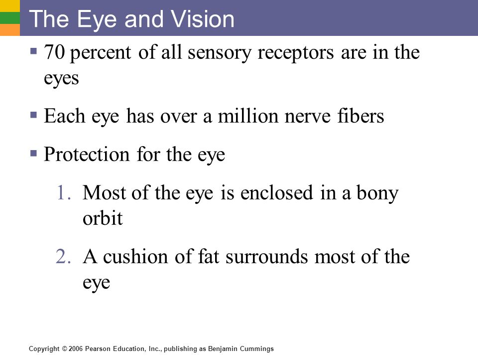 Copyright © 2006 Pearson Education, Inc., publishing as Benjamin Cummings The Eye and Vision  70 percent of all sensory receptors are in the eyes  Each eye has over a million nerve fibers  Protection for the eye 1.Most of the eye is enclosed in a bony orbit 2.A cushion of fat surrounds most of the eye