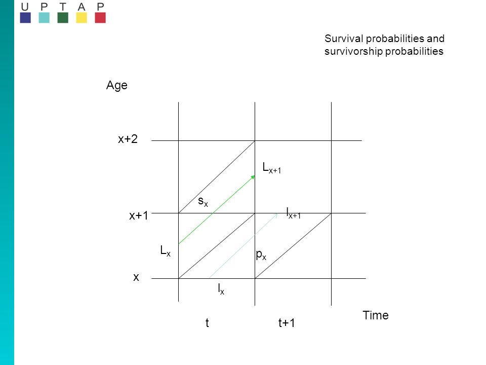 Time Survival probabilities and survivorship probabilities Age x x+1 x+2 tt+1 lxlx l x+1 LxLx L x+1 sxsx pxpx
