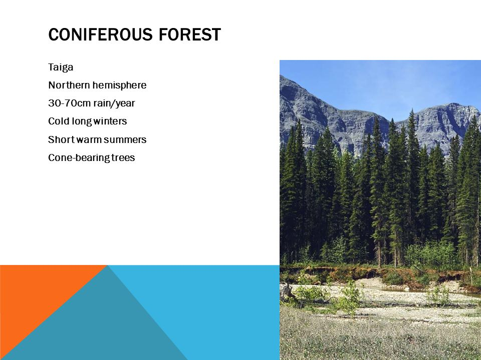 CONIFEROUS FOREST Taiga Northern hemisphere 30-70cm rain/year Cold long winters Short warm summers Cone-bearing trees