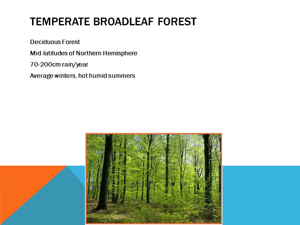 TEMPERATE BROADLEAF FOREST Deciduous Forest Mid-latitudes of Northern Hemisphere cm rain/year Average winters, hot humid summers