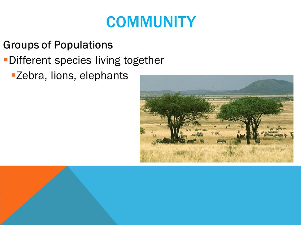 COMMUNITY Groups of Populations  Different species living together  Zebra, lions, elephants
