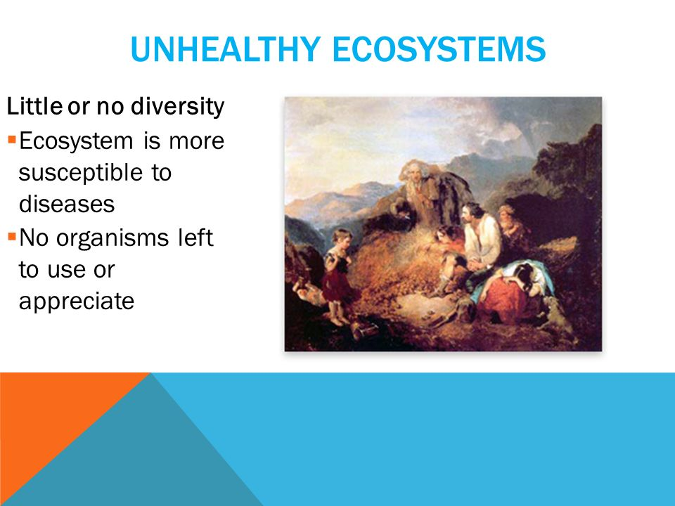 UNHEALTHY ECOSYSTEMS Little or no diversity  Ecosystem is more susceptible to diseases  No organisms left to use or appreciate