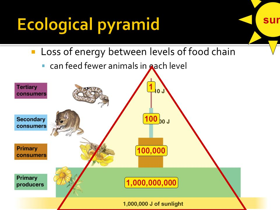  Loss of energy between levels of food chain  To where is the energy lost.