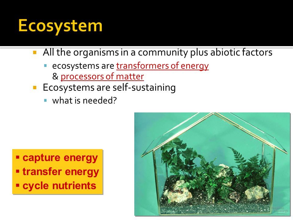  What limits the production in ecosystems.  How do nutrients move in the ecosystem.