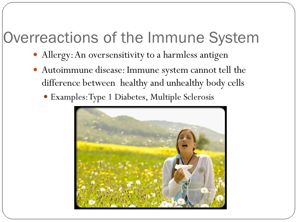 Overreactions of the Immune System Allergy: An oversensitivity to a harmless antigen Autoimmune disease: Immune system cannot tell the difference between healthy and unhealthy body cells Examples: Type 1 Diabetes, Multiple Sclerosis