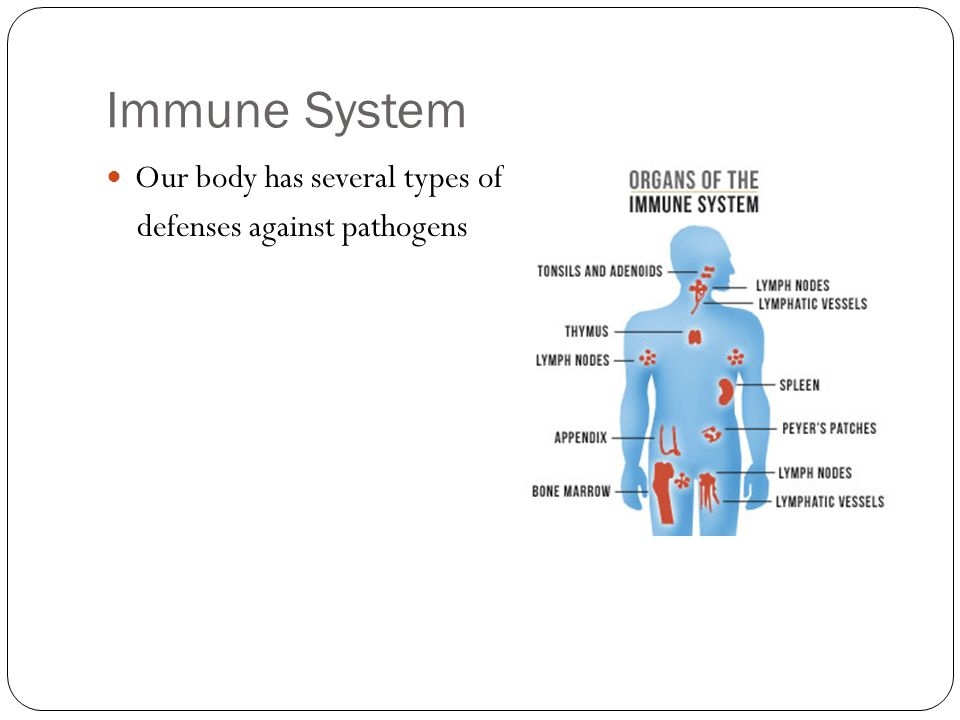 Immune System Our body has several types of defenses against pathogens