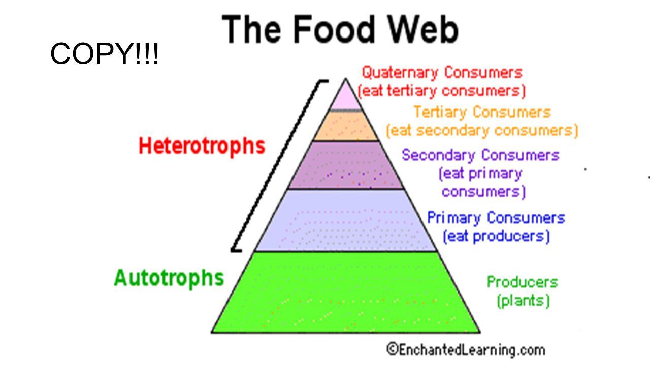 copy define producer consumer autotroph heterotroph food