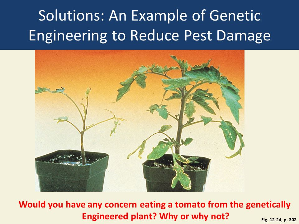 Solutions: An Example of Genetic Engineering to Reduce Pest Damage Fig.