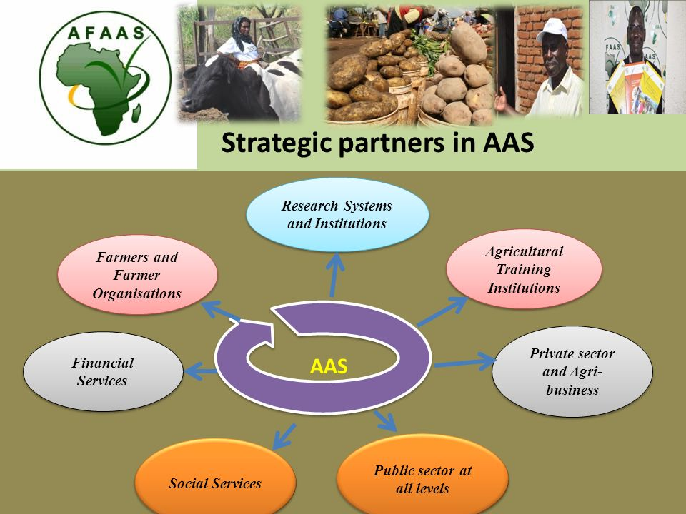 Research Systems and Institutions Farmers and Farmer Organisations Agricultural Training Institutions Private sector and Agri- business Financial Services Social Services Public sector at all levels Strategic partners in AAS AAS