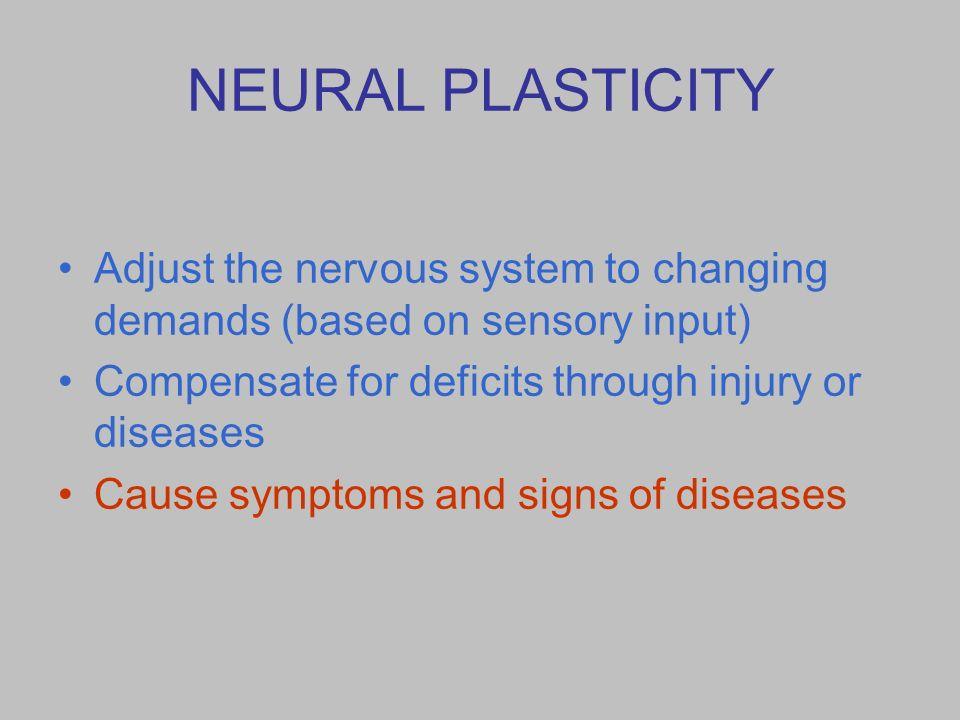 Neuroplasticity – Basis for Lifelong Learning