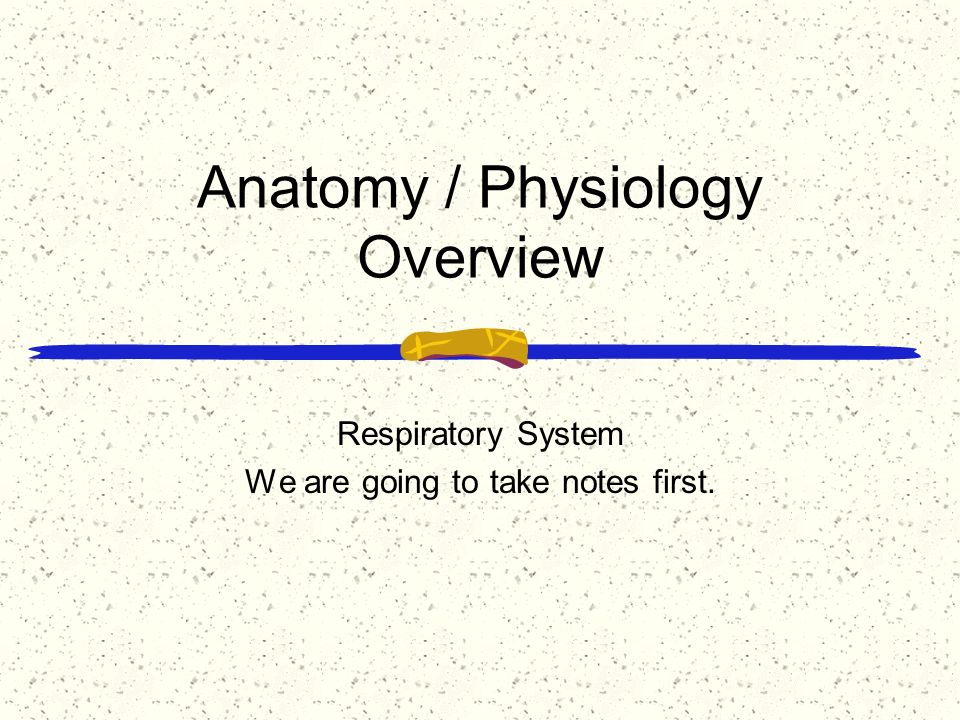 Anatomy / Physiology Overview Respiratory System We are going to ...