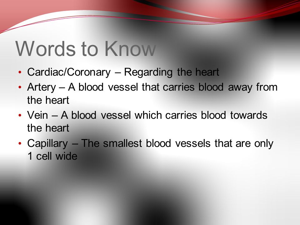 The Cardiovascular System. It is also known as the circulatory ...