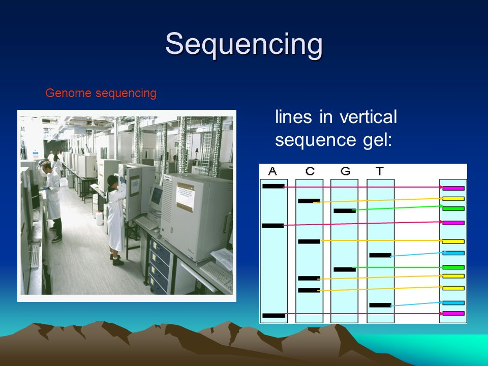 Sequencing lines in vertical sequence gel: Genome sequencing