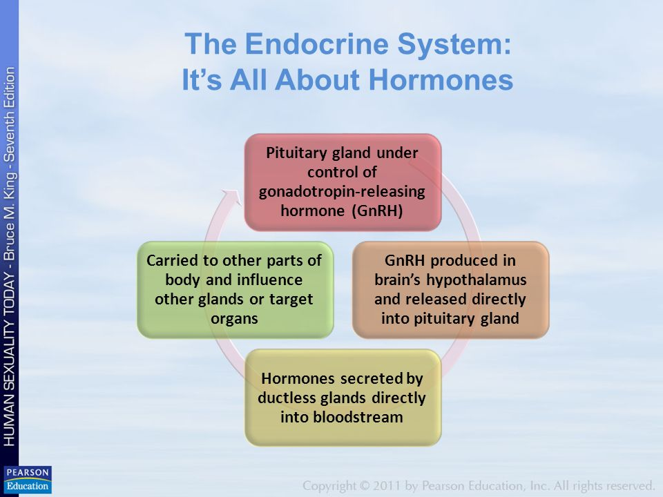 Chapter 3 Hormones And Sexuality The Endocrine System Its All