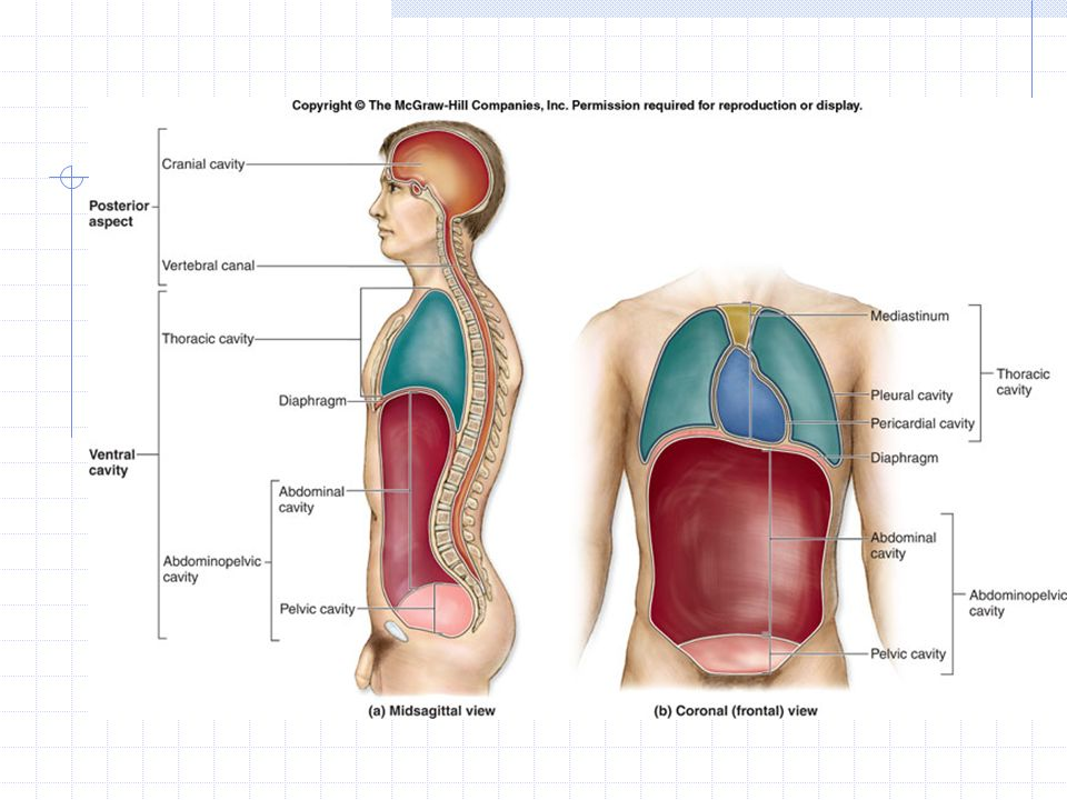 Introduction To The Human Body Ppt Video Online Download