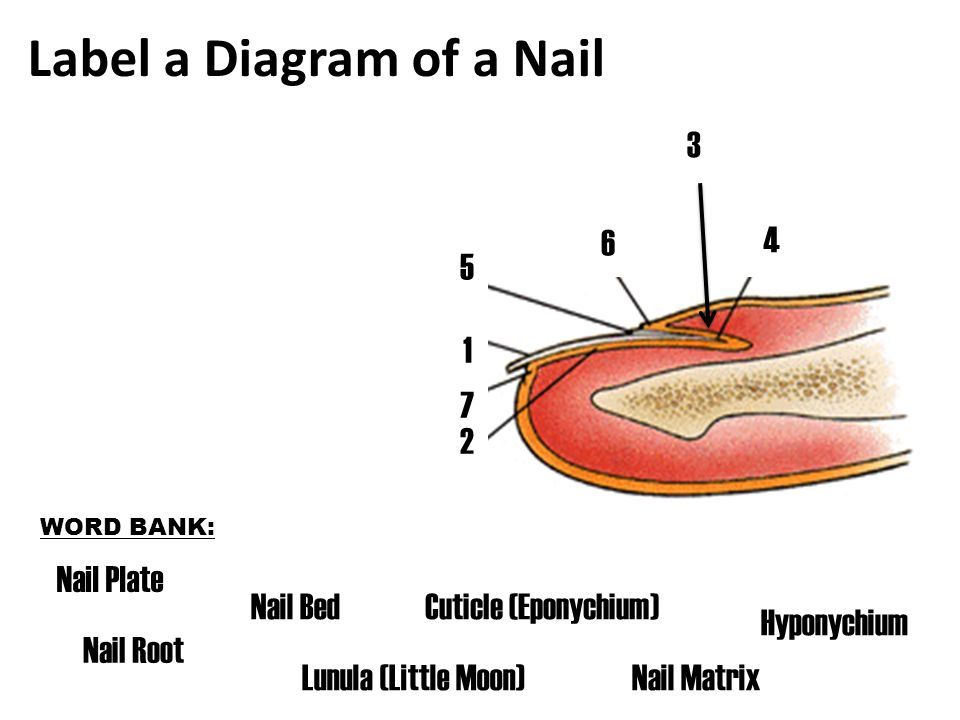 Exercise 7 Of The Nail Diagram Diy Enthusiasts Wiring Diagrams
