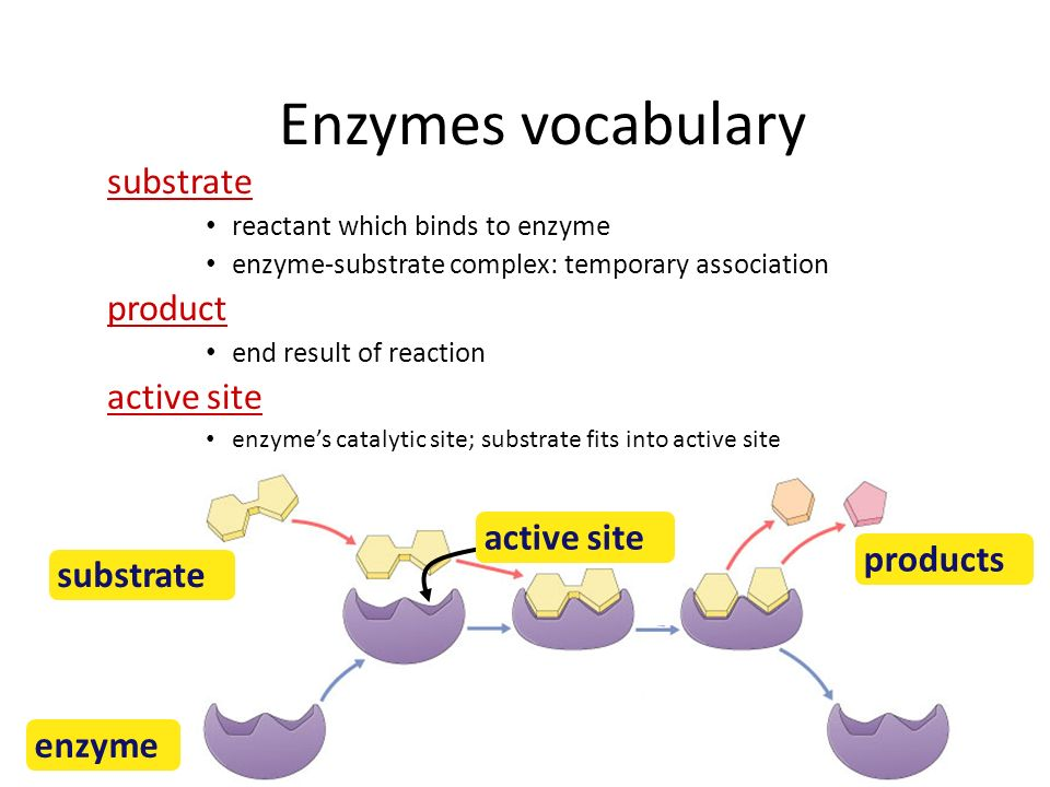 Enzymes Biological catalysts – proteins (& RNA) – facilitate chemical reactions increase rate of reaction without being consumed reduce activation energy – required for most biological reactions – highly specific thousands of different enzymes in cells – control reactions of life